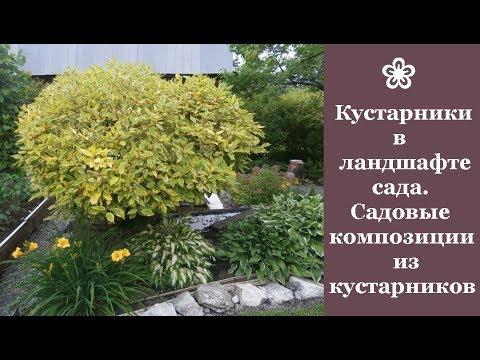 ❀ Кустарники в ландшафте сада. Садовые композиции из кустарников