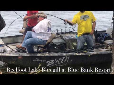 blue-bank-resort   Vlog