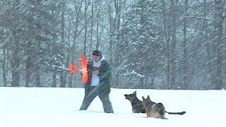 More Fms Easy Trainer With The Dogs In The Snow