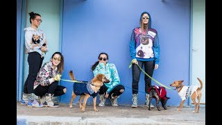 הפקת אופנה צער בעלי חיים  | ITGIRLS
