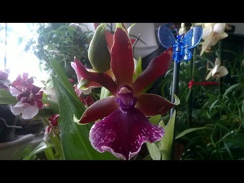 служба знакомств орхидея