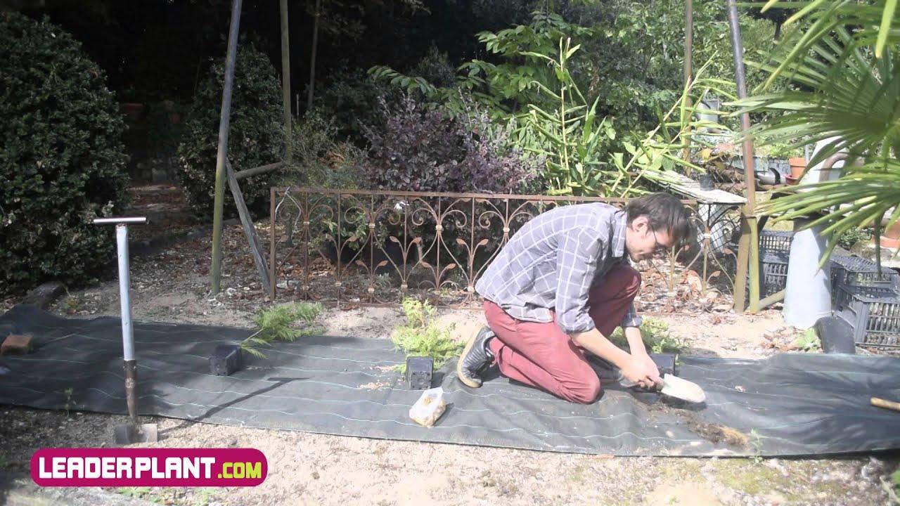 Comment Planter Une Haie De Cypres Avec Une Toile De Paillage Youtube