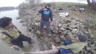 sacramento sturgeon fishing part 1