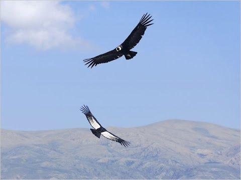 картинки орела