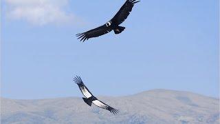 Скачать Два орла