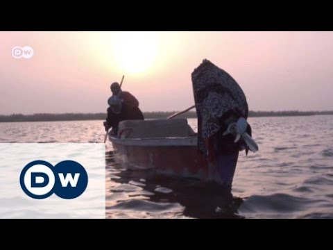 Reviving the marshlands in southern Iraq | Journal