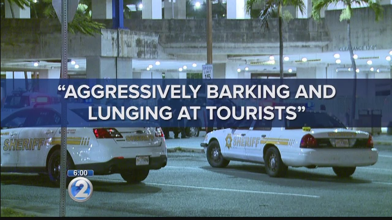 Securitas on shooting death of dog at airport: officer fired in self-defense