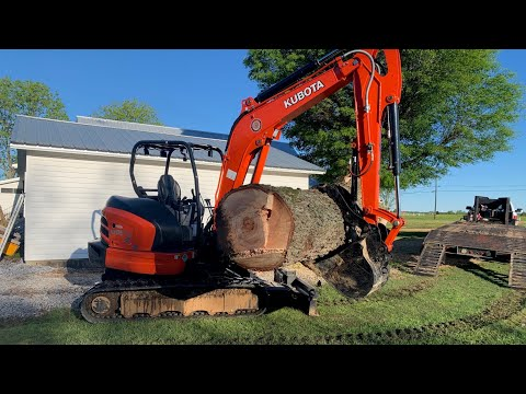 "Kubota mini excavator against a  33"" pecan tree!"