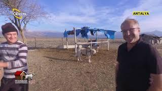 Antalya'da Kangal Bakımı ve Beslemesi - KANGAL AŞKI / Çiftçi TV