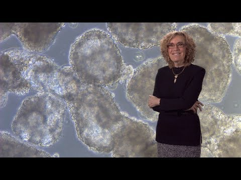 Elaine Fuchs (Rockefeller, HHMI) 1: Skin Stem Cells: Biology and Promise for Regenerative Medicine