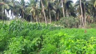 Agriculture farming in india | Agriculture  in india
