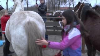 Stichting Jong Rijsenburg - Sinterklaas 2014