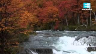 Cuatro estaciones en la Patagonia: Bosque de lengas, otoño - Canal Encuentro HD