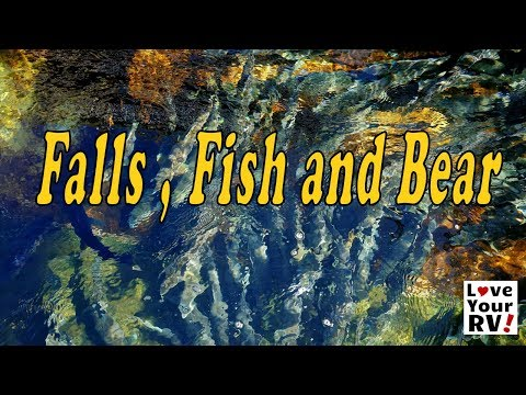 Falls and  River and  Fish and a Bear - Exploring Near Campbell River BC