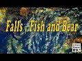 Falls and  River and  Fish and a Bear - Exploring Near Campbell River BC