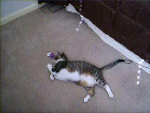 Beans the Cat