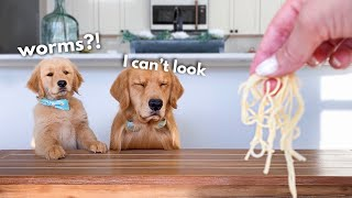 Dog Reviews Food With Son | Tucker Taste Test 22