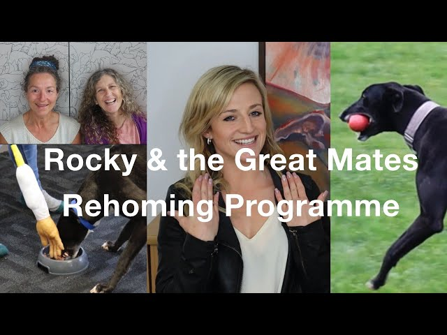 Episode 13: Greyhound Rocky & the Great Mates Rehoming Programme