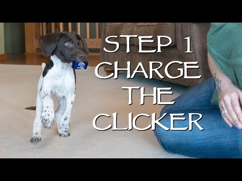 How To Train Your New Puppy - Teach This First