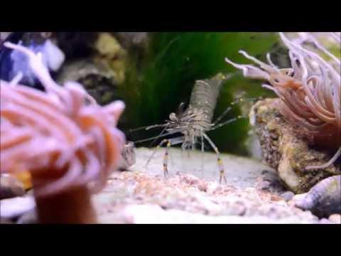 UK cold saltwater rock pool aquarium montage