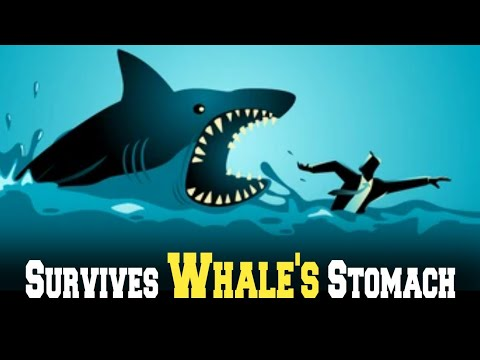 Man survives inside whale's stomach for three days How to survive a whale attack_By_ Ahmed Chaudhary