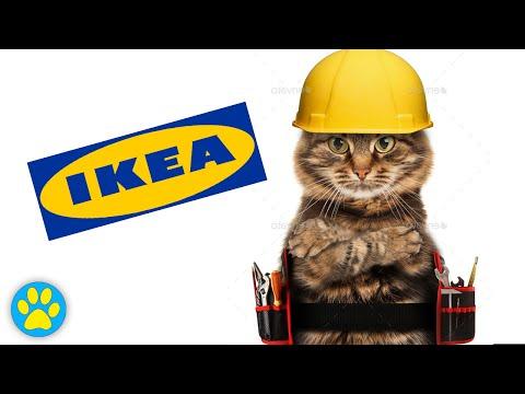 How Cats Build Ikea Furniture