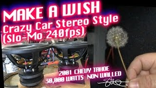 Make A Wish - Crazy Car Stereo Style 240fps Slow Mo Dandelion vs 30,000 Watts