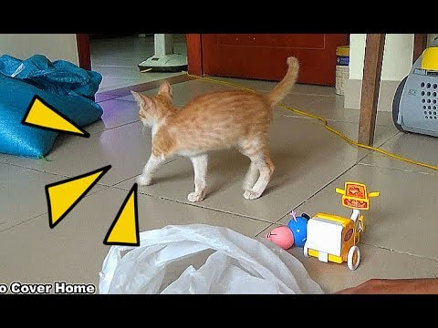 Cat Playing With Eggs So Cute And Crazy | Funny Cat Video 2017 | Meo Cover Home