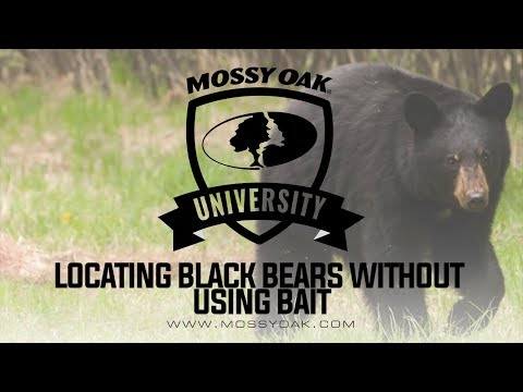 Locating Black Bears Without Using Bait