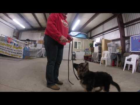 Competitive Dog Training By Prodogz & Jason Lake Rogue Valley Oregon