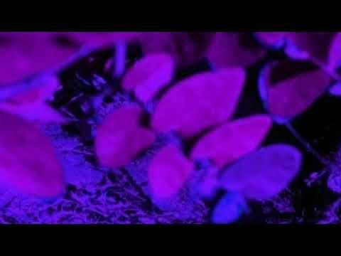 SHFLA-DES ARTE (Prod. ThjONE) from YouTube · Duration:  3 minutes 39 seconds