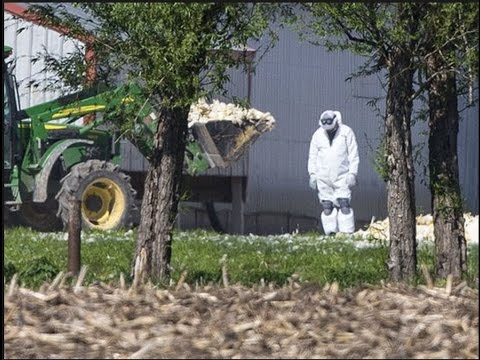 "30 Poultry Farms in Quarantine - New Super Bird Flu Strain ""H5Nx"" Spreading"