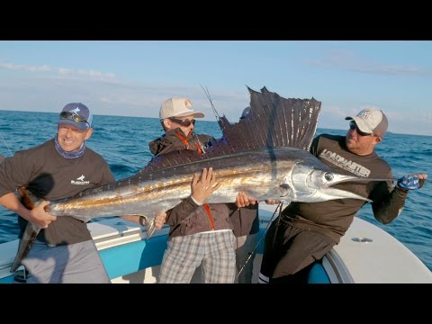 Hungry Barracudas and a Surprise Giant Sailfish - 4K