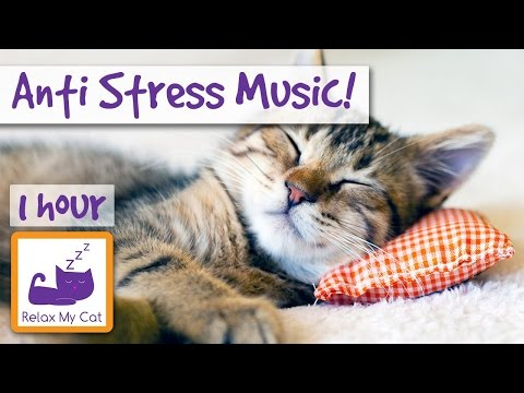 Anti-Stress Piano and Violin Music for Cats and Kittens, End Stress With Relaxation Music 🐱