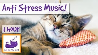 Anti-Stress Piano and Violin Music for Cats and Kittens, End Stress With Relaxation Music �