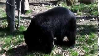черный медведь(, 2014-09-01T05:04:36.000Z)
