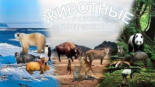 Животные разных континентов. Развивающее видео. Познаём Мир.