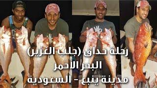 طريقة حداق الغزير ( جلب غزير ) من عمق 200 متر في البحر الاحمر - ينبع السعودية