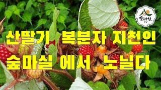 딸기 산촌체험 산림 임…