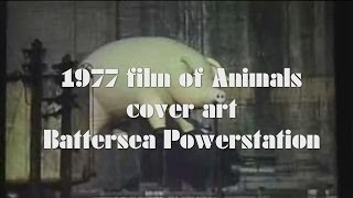 """Pink Floyd 1977 film of """"Animals"""" cover art shooting"""