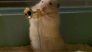 華麗な演奏を披露するハムスターのジャズバンド!