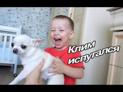 С какво да храним кучето си +GIVEAWAYиз YouTube · С высокой четкостью · Длительность: 14 мин44 с  · Просмотров: 286 · отправлено: 22.08.2017 · кем отправлено: Cvety Vassileva - Designer Dog Clothing