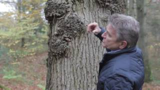 Realising the Value of Your Hardwoods
