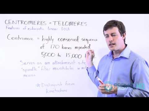 MCAT Centromeres