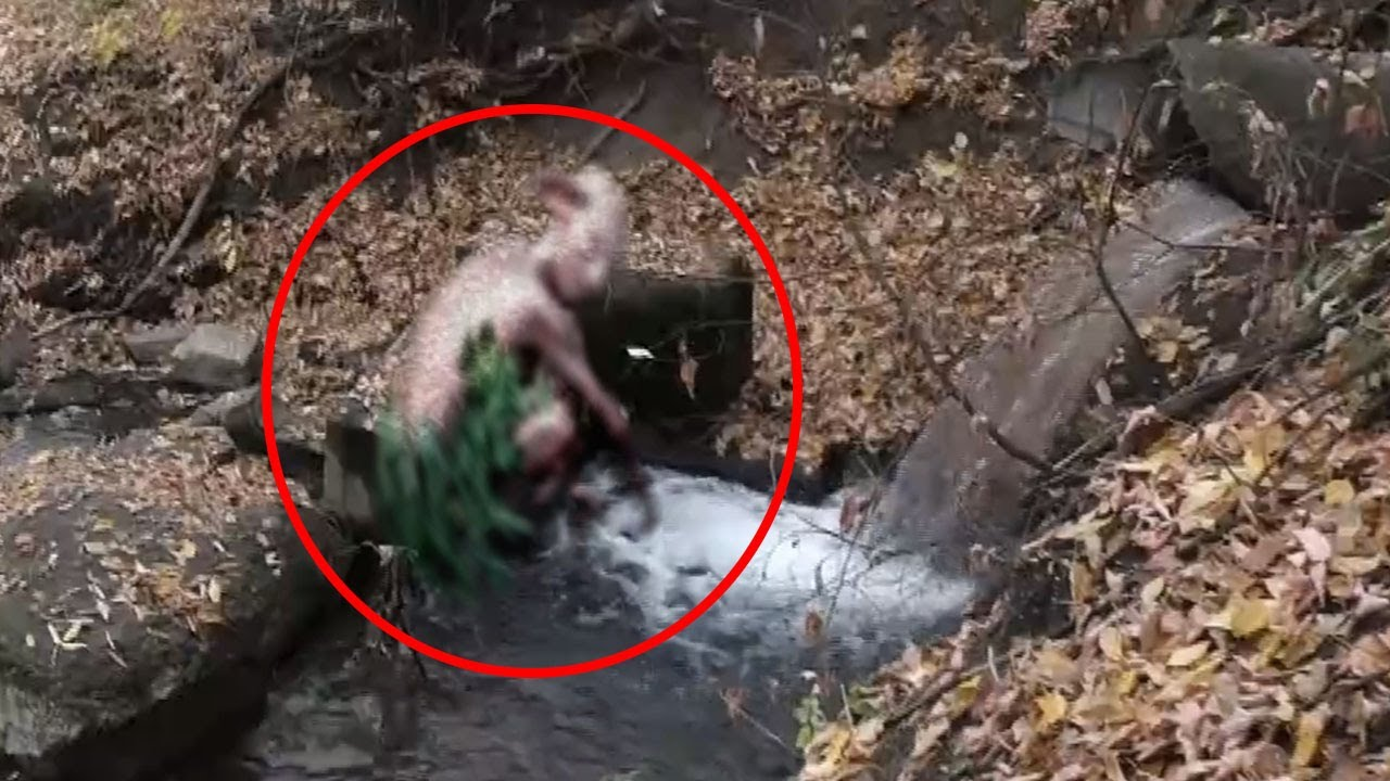 Download 13 Real-Life Horror Creatures Caught on Camera