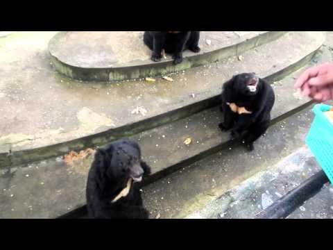 myanmar zoo bears