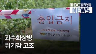 [뉴스리포트]'과일의 구제역' 과수화상병 위기감 고조/…