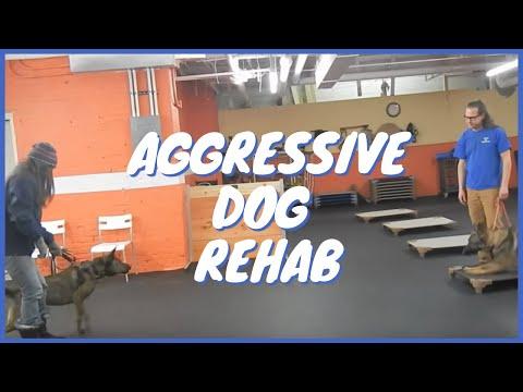 Aggressive dog Rehab
