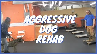 Aggressive Dog Rehab