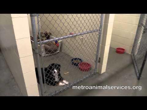 Metro Animal Services Tour 2015